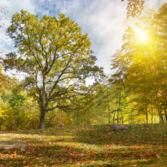 sunset in the autumn park