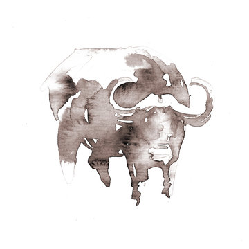 African cape buffalo. Watercolor illustration on white background. Sepia.