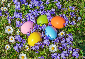 Easter eggs on violets and grass background
