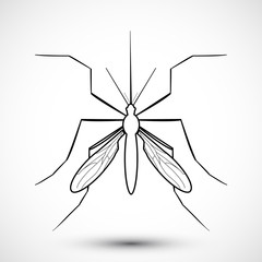 Isolated  illustrated Mosquito. Nature Aedes Aegypti. Ideal for