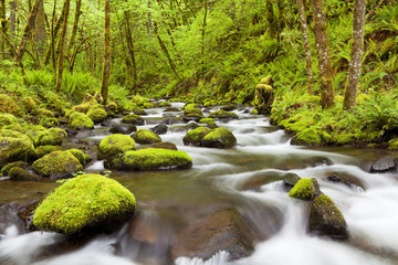 Gorton Creek through lush rainforest, Columbia River Gorge, USA
