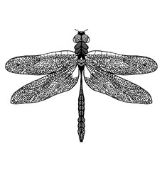 Hand drawn dragonfly on white background
