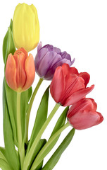 bouquet of tulips in five different colors