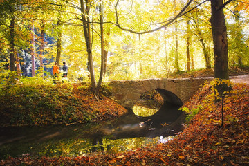 view of the autumn solar wood and the bridge through the small r