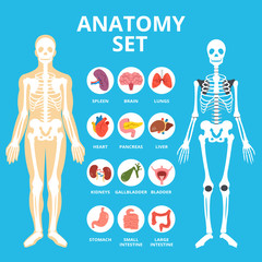 Anatomy set, anatomy infographics. Human Internal organs icons set, body structure, skeleton