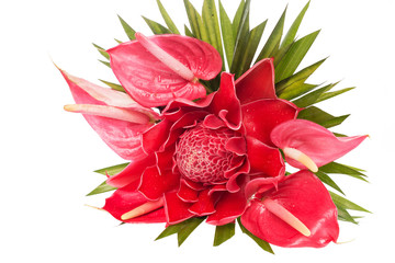 red Flamingo Flower and Torch Ginger