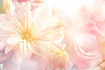 Pink peony flower background