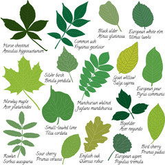Leaves collection with names