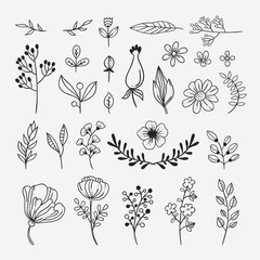 Hand sketched plants and flowers nature illustrations and vector design elements