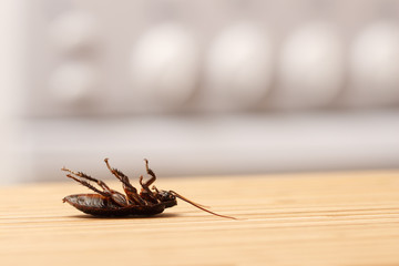 Dead cockroaches in an apartment kitchen. Inside high-rise buildings. Fight with cockroaches in the apartment. Extermination.