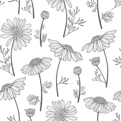 Seamless vector pattern with chamomiles. Hand-drawn floral background