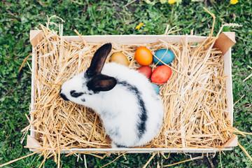 Easter rabbit sitting on Easter eggs in straw nest