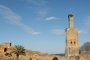 storks nesting on the top of the minaret of the ruins of the Islamic complex in the Chellah of Rabat