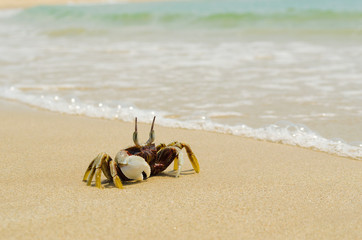 crab on a sand.crab on the beach.