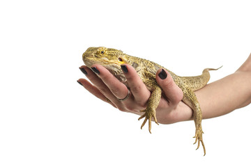Cool good pet lizard and snake on a white background excellent photos for advertisement shop or TV about animals