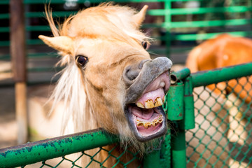 Funny smiling horse portrait