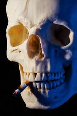 Schädelknochen mit Zigarettenstummel