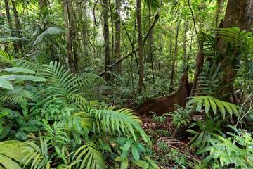 Deep jungle in Ko Kood island