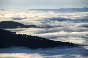 Island of trees in a sea of fog