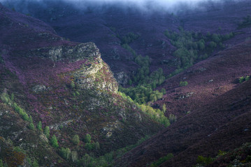 purple heather covered gorges and green forests