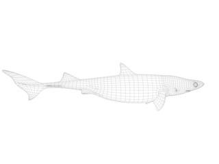 3d wireframe shark