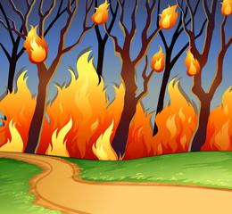 Wild fire in the forest