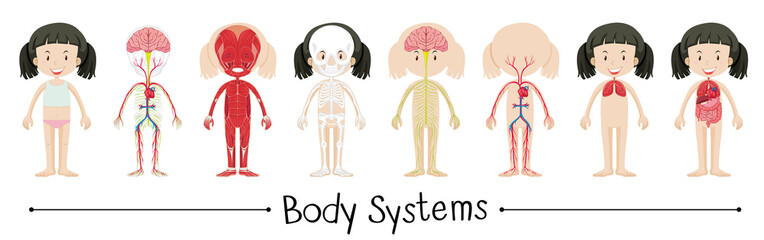 Body systems of human girl