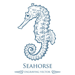 Seahorse sea horse nature ocean aquatic underwater vector. Hand drawn marine engraving illustration on white background