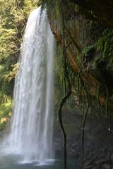 Misol-Ha waterfall, Chiapas, Mexico,