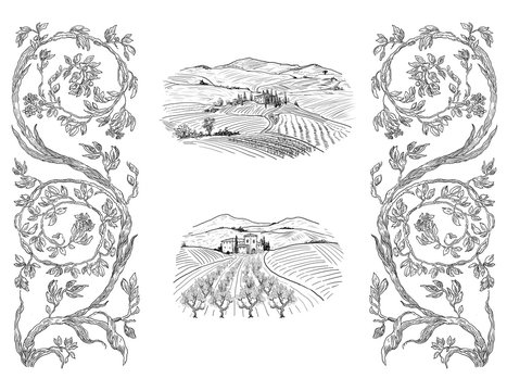 Wine illustration art illustration