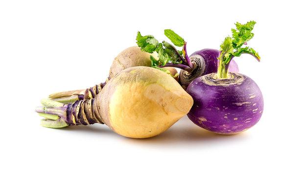 Freshly harvested turnips and swede produce