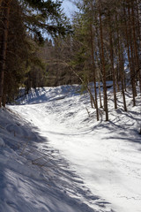 ski trail in the winter the trees