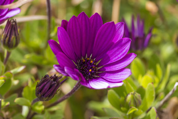 Blume in einem Garten