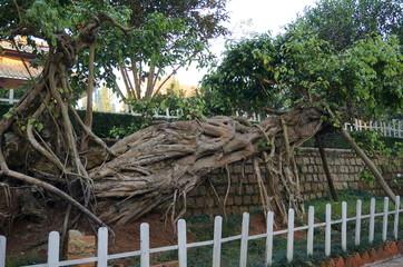 Экзотические деревья в саду буддийского монастыря Чук Лам в Далате, Вьетнам