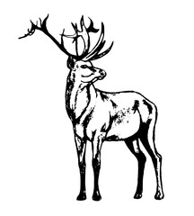 Graphic image of a wild animal on a white background. The figure in black outline red deer, a wild animal with big antlers. Vector illustration, abstract in black and white