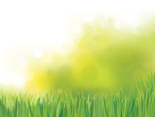 Vector green grass  on  bokeh, nature background.