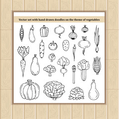 Vector set with hand drawn isolated doodles on the theme of vegetables, food