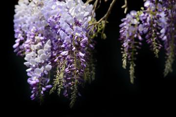 zarte Blumenrispen