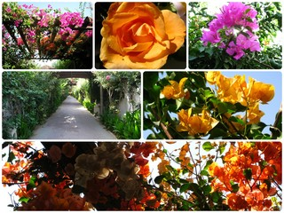 photo composition of flowers