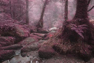 Poster Crimson Unusual surreal alternate color forest landscape image