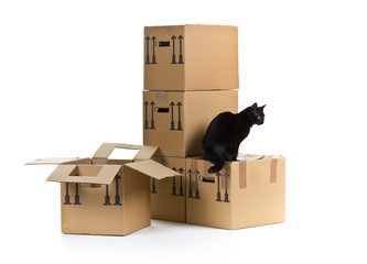 Cat with moving carton boxes stack