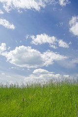 Sunny meadow scene