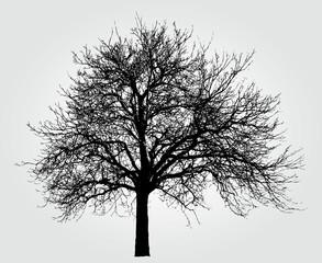 tree 20160317 2054