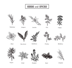 Herbs and Wild Flowers. Botany. 15 Set. Vintage flowers. Vector illustration in the style of engravings.