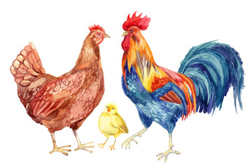 Chicken, hen, rooster, egg . Watercolor painting