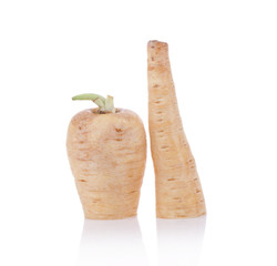 Fresh parsnip roots on a white background