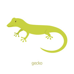Gecko. Cartoon character.