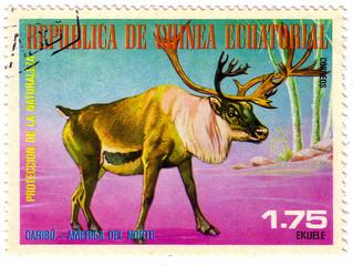EQUATORIAL GUINEA - CIRCA 1977: a stamp printed in Equatorial Guinea shows Caribou, Rangifer Tarandus, Wild Animal of the North America, circa 1977