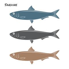 Sardine fish vector illustration on white background