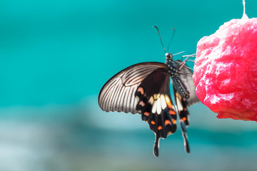Sweet water for feeding butterfly, Animal feed hanging on the tr